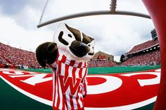 Bucky Badger cheers from the endzone during a football game at Camp Randall Stadium.     Client: University of Wisconsin-Madison  © UW-Madison University Communications 608-262-0067  Photo by: Michael Forster Rothbart  Date:  2001     File#:   color slide
