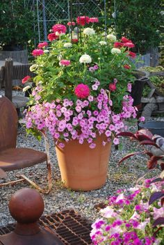 Zinnia's make a great potted plant. Do this with Hot Pants Disco Lights by Live Mulch  #zinnia