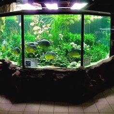 21 Best Aquascaping Design Ideas to Decor Your Aquarium - Tips Inside - homelovers Terrariums, Aquarium Terrarium, Nature Aquarium, Tropical Aquarium, Saltwater Aquarium, Planted Aquarium, Freshwater Aquarium, Aquariums Super, Amazing Aquariums