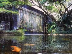 zoologico de cali acuario - Buscar con Google