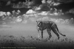 Ready to run by albertoghizzipanizza - Spectacular Monochromes Photo Contest
