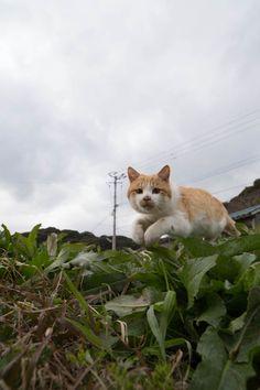 f:id:fubirai:20140215231140j:image