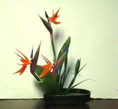 moribana - birds of paradise and iris