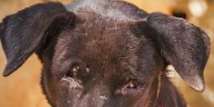 Create & Enforce New Jersey Animal Cruelty Registry