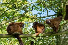 Bonnie, Bourbon & Biscuit 2015 @AnnasWelshZoo picture by Suzanne Kirby Davies.