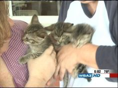 A bomb squad was called to Wellston, Ohio late Thursday night after someone ditched a box on the front porch of a home and ran away. No one knew what it was and protocol was to call in the bomb squad. Ended up being a box full of kittens! Cuddly end to what could have been dangerous.