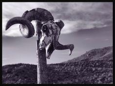 Ram's skull, Tabernas Desert, Almeria, Spain