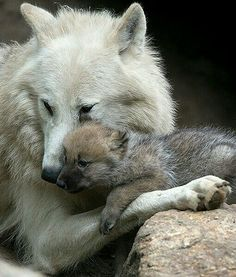 Moment tendresse