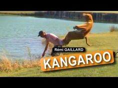 ▶ Kangaroo (Rémi GAILLARD) - YouTube I could laugh for hours watching Remi's videos.