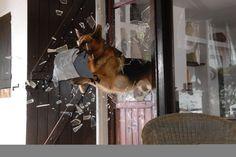 teresa ann miller - trainer of the German Shepherd star of Kommissar Rex | Pictures & Photos of Teresa Ann Miller - IMDb