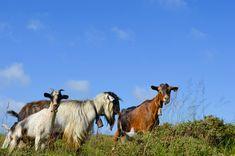 #castrolaboreiro Horses, Animals, Animales, Animaux, Animal, Animais, Horse