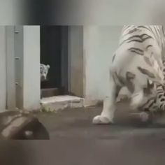 funny animals can't stop laughing ; funny animals videos can't stop laughing ; funny animals with captions ; Funny Animal Memes, Cute Funny Animals, Funny Animal Pictures, Cute Baby Animals, Cute Cats, Wild Animals, Funny Humor, Silly Cats, Animals Dog