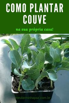 Home Vegetable Garden, Home And Garden, Comment Planter, Bottle Garden, Rustic Gardens, Natural World, Beautiful Gardens, Cabbage, Plant Leaves