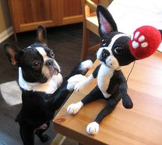 Come on down and say that! So cute! #bostonterrier #puppy #dog