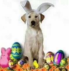 Happy Easter from Pupcakes