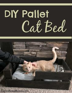Spoil your fur-baby and create this DIY Pallet Cat Bed today! It is both simple and inexpensive. #YouGottaBeKittenMe