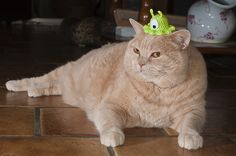 Futurama brain slug hat for cats.  I would likely die of laughter if I had one of these for my cat...
