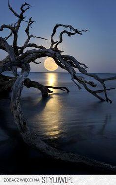 Tree stylowi_pl_fotografia_8750987.jpg (280×445)