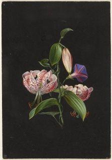 Lillies Wilhelm von Wright 1853
