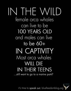 Give a Fuck About Nature - truth about captive orca whales
