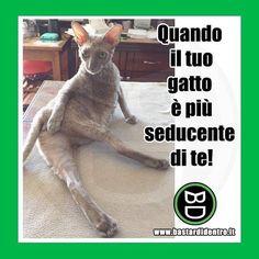 E il guaio è che in fatto di sensualità ti batte di gran lunga! #bastardidentro #gatto #seducente www.bastardidentro.it