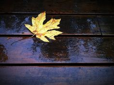 Affliction of My Dark Mistress by DrCuervo, via Flickr | #warm #cool #blue #yellow #brown #iphoneography