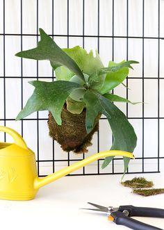 diy modern staghorn fern