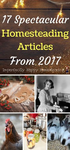17 Spectacular Homesteading Articles from 2017 - gardening, backyard farming, chickens, rabbits, diy and more!