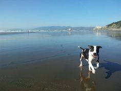 Sometimes you just gotta run.  Ocean Beach, San Francisco