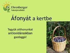 http://www.dr-ehrenberger.hu/afonyat-kertbe/  Áfonyát a kertbe - Dr. Ehrenberger by SeresBim via slideshare áfonya, antioxidáns, szem, szürkehályog