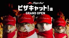 Watch what happens when cats run a Japanese Pizza Hut.  #cats