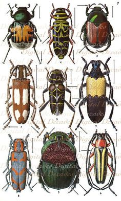 bug anatomy illustration, use with grade art project Create-A-Bug Beetle Insect, Beetle Bug, Insect Art, Insect Orders, Cool Bugs, Bug Art, Beautiful Bugs, Bugs And Insects, Art Plastique
