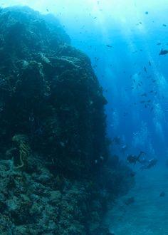 Dykking Saba Island - Dykkebazaar.no