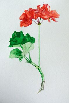 Original Botanical Watercolour Drawing by MeaghanGraceGallery, $90.00