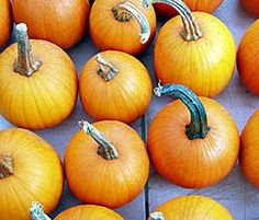 Make-Ahead or Crockpot Recipes Can Help with Timing for Thanksgiving Dinner | BlogHer