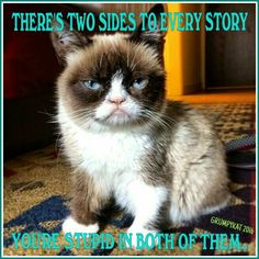 Another Grumpy Cat meme by the other Grumpy Kat 2016 2Stories n 2Stupid