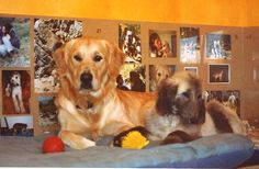 Cuper y Adur su primer día juntos en casa