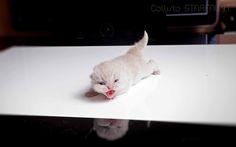 Video of kittens http://starfall.lt/