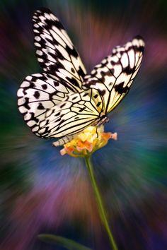 Butterfly - ©Yasmin Simpson