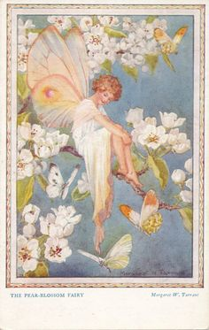 'The Pea Blossom Fairy' Margaret Tarrant pc