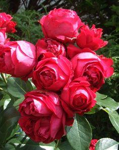 Vos roses font pâle figure ? Traitez vos arbustes avec une cuillère à soupe de lait et une cuillère à soupe de vinaigre d'alcool diluées dans un litre d'eau. Grâce à cette mixture écologique, vous obtiendrez des roses épanouies et odorantes.
