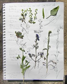 Meredith plant sketchbook