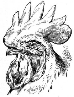 Rooster Portrait Stark and bold, this black and white portrait of a rooster grabs the attention of all who see this proud bird. Rooster Portrait Stark and bold, this black and white portrait of a rooster grabs the attention of all who see thi Rooster Painting, Rooster Art, Chicken Painting, Chicken Art, Bird Drawings, Animal Drawings, Line Drawing, Painting & Drawing, Wood Burning Art