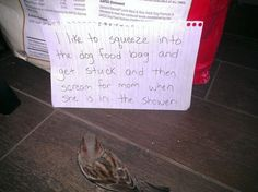 Bird shaming is a very effective form of discipline! OK, we lied. But it does make for some hilarious photos. Online Pet Supplies, Dog Supplies, Funny Animal Videos, Funny Animal Pictures, I Like Birds, Ideal Toys, Dog Shaming, Funny Birds, Sweet And Spicy