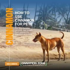 Discover how to use Cinnamon for your pets with information on what diseases it addresses, the dosage and possible side effects.