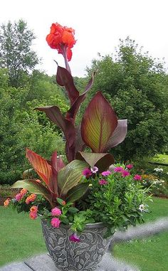 Tropicanna Black canna in back as thriller with brilliant red flower, accented with Tropicanna canna in foreground as filler, with bright orange, pink and white annual flowers as the spiller