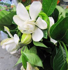 My favourite scent.  There were two gardenias in my wedding bouquet and the scent always reminds me of my wedding day.