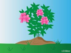 How to Plant Azaleas: 8 Steps (with Pictures) - wikiHow