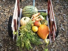 Sezonowa kuchnia biegacza - Bieganie od kuchni - wegetariańskie przepisy kulinarne dla biegaczy