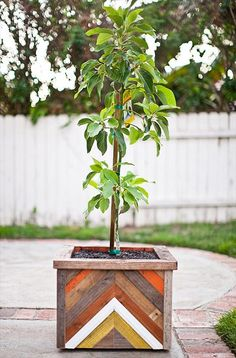 Plants + Animals >> Fruit tree in a hand made recycled wood planter box. Pflanzen + Tiere >> O Diy Wood Planters, Wood Planter Box, Recycled Planters, Outdoor Planters, Outdoor Projects, Diy Projects, Outdoor Decor, Indoor Outdoor, Pot Jardin